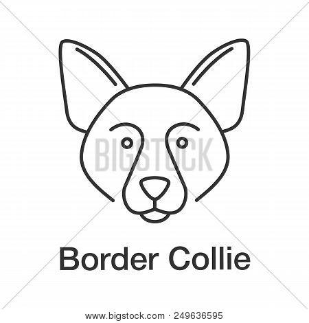 Border Collie Linear Icon. Scottish Sheepdog. Thin Line Illustration. Dog Breed. Contour Symbol. Vec