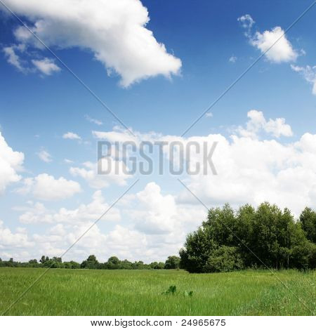 Green field,trees and blue sky.