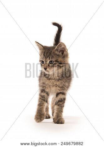 Cute Tabby Kitten On White