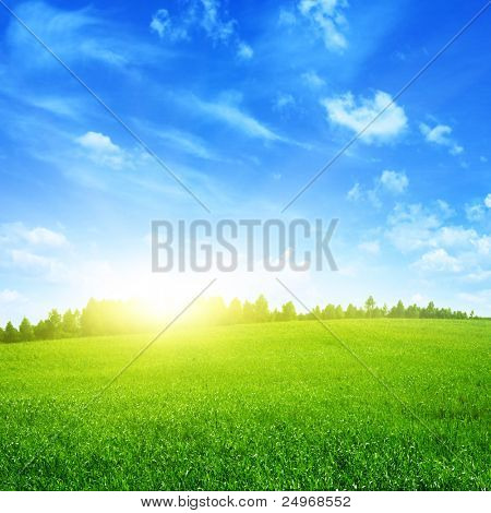 Sunny summer landscape.