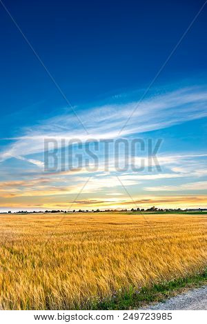 Sunset Landscape Over A Wheat Field. Copy Space. Blue Sky Over Yellow Harvest Field. Stock Photo.