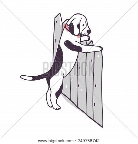 Cute Dog Trying To Climb Over Fence And Escape. Funny Naughty Doggy Or Puppy Isolated On White Backg