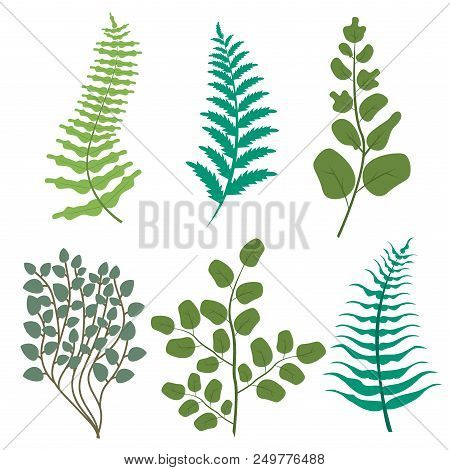 Green Leaves Floral Greenery Frest Fern Frond Eucalyptus Nature Branch Vector. Leaf Foliage Herb Pla