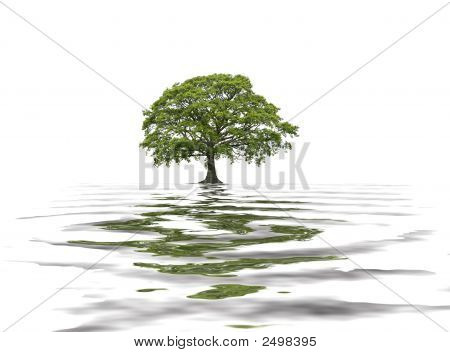 poster of Abstract of an oak tree in summer with reflection in water. Set against a white background.
