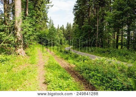 Forest Spring Landscape - Row Of Pine Forest Trees And Narrow Path Under Spring Bright Sunlight. For