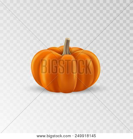 Pumpkin Realistic Icon. Orange Pumpkin Isolated. Vector Illustration