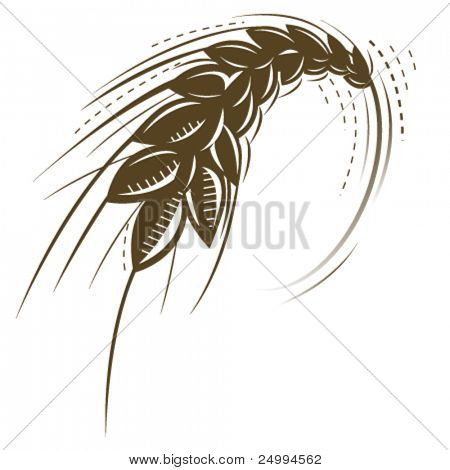 wheat isolated vector icon
