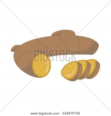 Vector Ginger Illustration Isolated In Cartoon Style. Herbs And Species Series