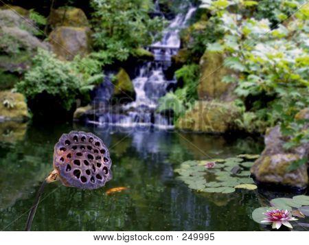 Pond Blossom