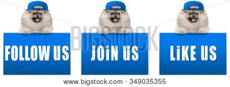 Cute Pomeranian Dog With Blue Cap, Leaning With Paws On Blue Social Media Sign With Text Follow Us,