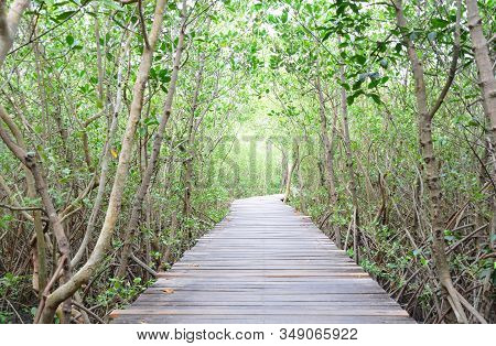 Wooden Bridge Walkway And Tree Tunnel In Mangrove Forest