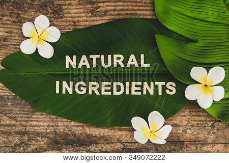 Beauty Industry And Ethical Vegan Products, Natural Ingredients Message On Tropical Banana Leaf With