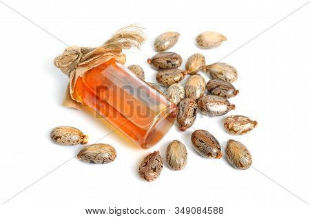 Seed Of Ricinus Communis, The Castor Bean Or Castor Oil Plant. Isolated On White Background