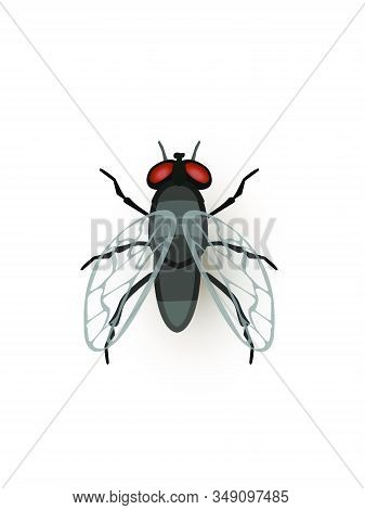Fly, Tiny Insect Flat Vector Illustration. Flying Black Bug Closeup Top View. Small Animal, Beetle,