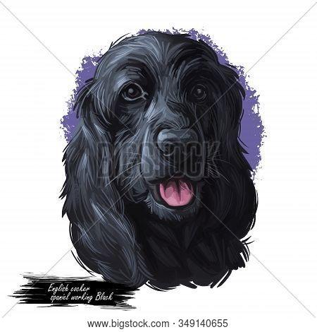 English Cocker Spaniel Working Black Breed Of Gun Dog Digital Art Illustration Of Cute Canine Animal