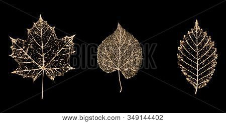 Set Of Three Transparent Gold Colored Skeleton Leaves On Black Background. Golden Leaf Of Maple, Bee