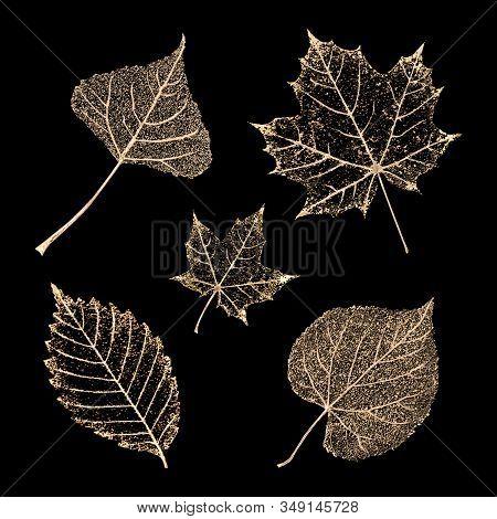 Set Of Transparent Gold Colored Skeleton Leaves On Black Background. Golden Leaf Of Maple, Birch, Be