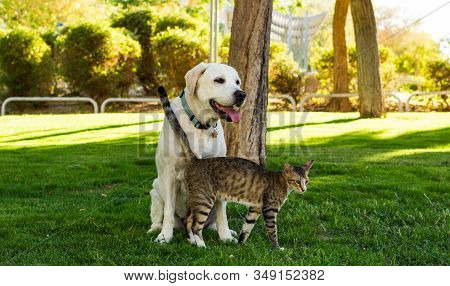 Dog And Cat Friendship Animal Shelter Concept Photography Sunny Bright Park Outdoor Nature Environme