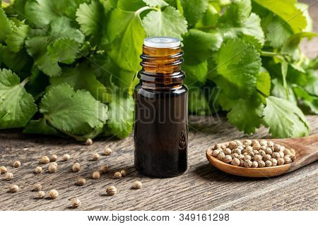 A Bottle Of Essential Oil With Coriander Seeds On A Spoon And Cilantro Leaves In The Background