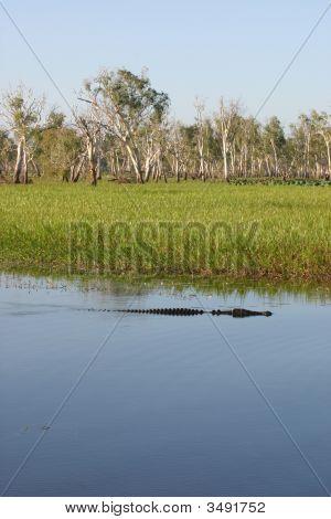Busch An Croc