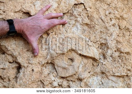 Rock Imprint Of Prehistoric Fossil Of Ammonite, Negev Desert.