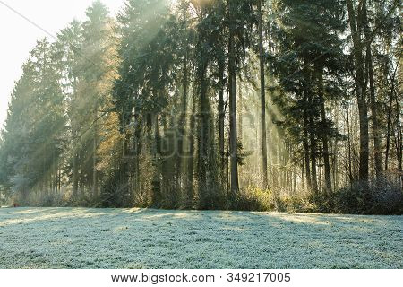 Sun Rays Glowing During Sunrise After A Foggy Night