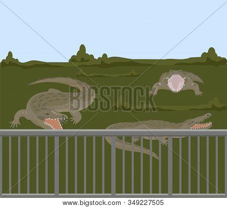 Reptile Animals Dangerous Crocodiles Wild Predator Alligators Vector Illustration. Dangerous Hangry