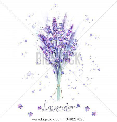 Watercolor Lavender Bouquet. Lavender Flowers, Plants, Watercolour Splashes And Lettering On White B