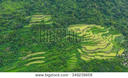 Rice Terrace In Cordillera Mountains, Luzon, Philippines. Growing Rice In Highlands, Top View.