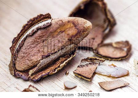 Brazil Nut, Amazon Nut, Acre Nut, Brazil Nut, Amazon Nut, Bolivian Nut, Toquei Or Tururi, Is A Large