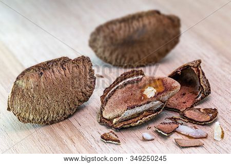 Details Of A Brazil Nut Still Closed, With Shell. Brazil Nuts For Consumption. Chestnut Most Consume