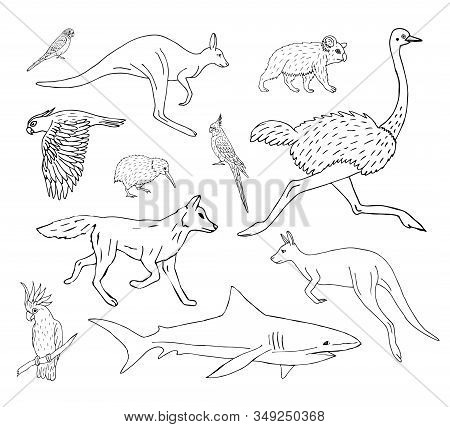 Vector Set Bundle Of Hand Drawn Doodle Sketch Australian Wild Animals Isolated On White Background