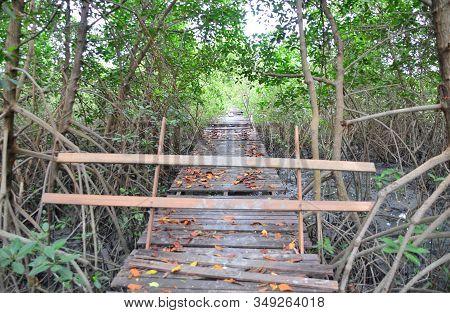 Wooden Bridge Walkway With Barrier In Mangrove Forest