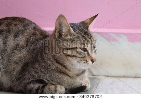 Close-up Of A Brown Domestic Cat Resting At Home With Red Wall , Outdoors Domestic Animals , Cats Im