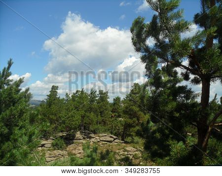 Conifer Tree On The Background Of The Conifer Forest, Rock And Blue Sky With Clouds
