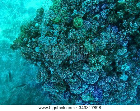 Coral Reefs Under Turquoise Water In The Red Sea. Underwater World, Top View Through Clear Water, Be