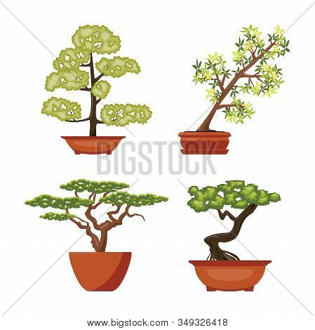 Vector Set Of Colorful Bonsai Trees In Pots, Isolated On White Background. Chinese Bonsai Art Symbol