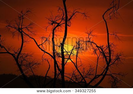 Twisted Burnt And Blackened Stark And Bare Branches Of Trees After Bush Fires Here  In Australia.