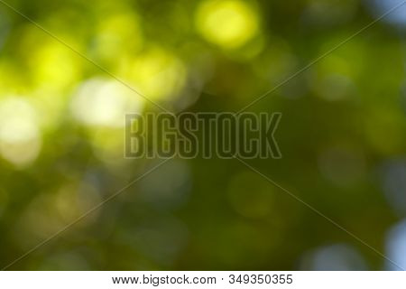 Background Bokeh. Abstract Green Colors. Colorful Abstract Background. Background Texture. Abstract