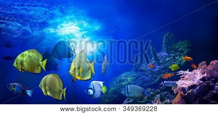 Wealth of coral reef fish. Underwater colorful sea world. Life in the coral reef. Ecosystem.