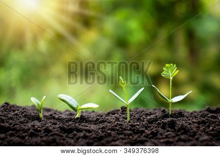 Small Trees Of Different Sizes On A Green Background, The Concept Of Environmental Stewardship And W