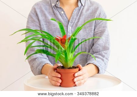 Young Woman Holding Guzmania Plant With Red Flower On Light Neutral Background.