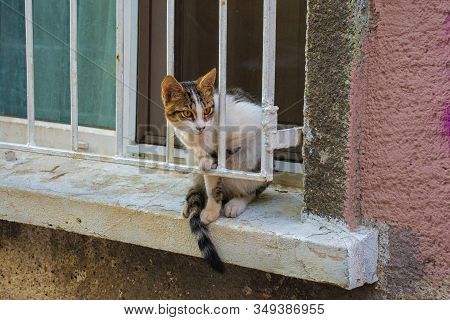 One of Istanbul's many street cats on a windowsill in the Moda neighbourhood of Kadikoy on the Asian side of the city