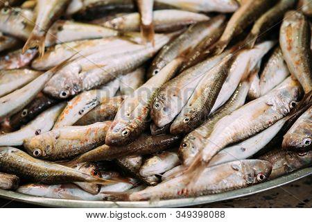 Fresh Mullus Fish On Display On Ice On Fishermen Market Store Shop. Seafood Fish Background. Top Vie