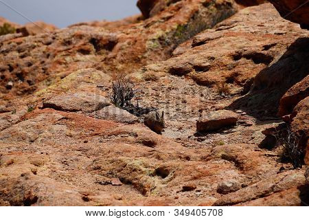 A Small Mammal In The Laguna Negra. Landscape Of The Bolivian Highlands. Desert Landscape Of The And