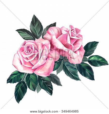 Flower Rose Pink With Green Leaves, Art Illustration Painted With Watercolors Isolated On White Back