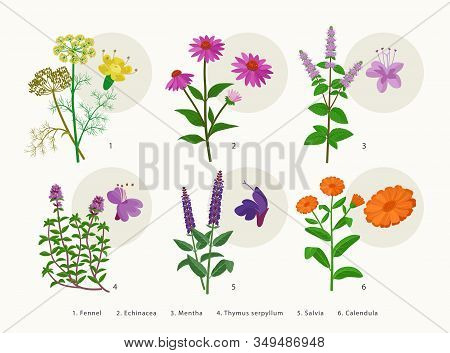 Medicinal Herbs And Flowers, Healing Plants Icons Collection, Flat Illustrations Isolated On White B