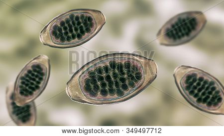 Eggs Of Parasitic Roundworm Trichuris Trichiura, Or Whipworm, The Causative Agent Of Trichuriasis, D
