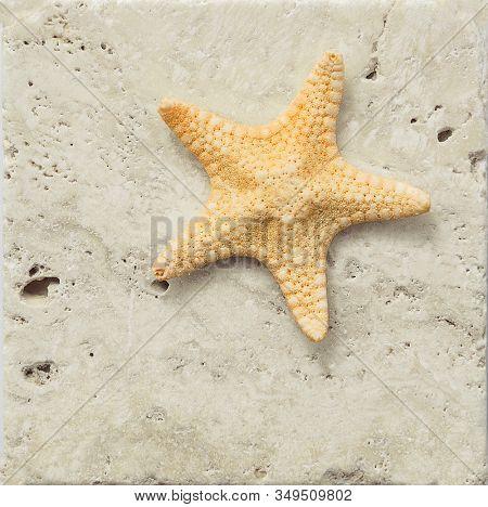 Starfish on a marble slab