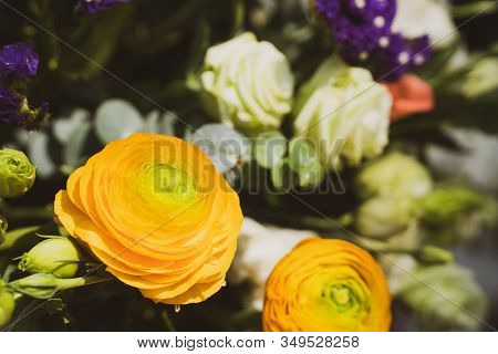 Beautiful Bright Coloured Wild Flowers Growing  For Background And Texture
